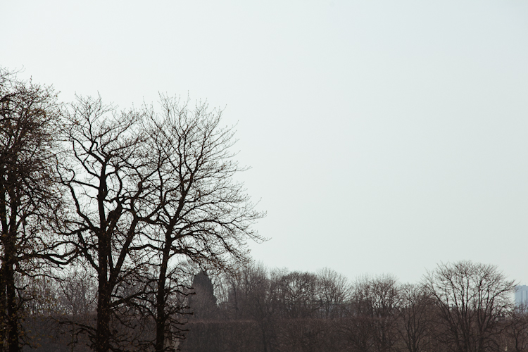 Wintery trees at Jardin du Luxembourg