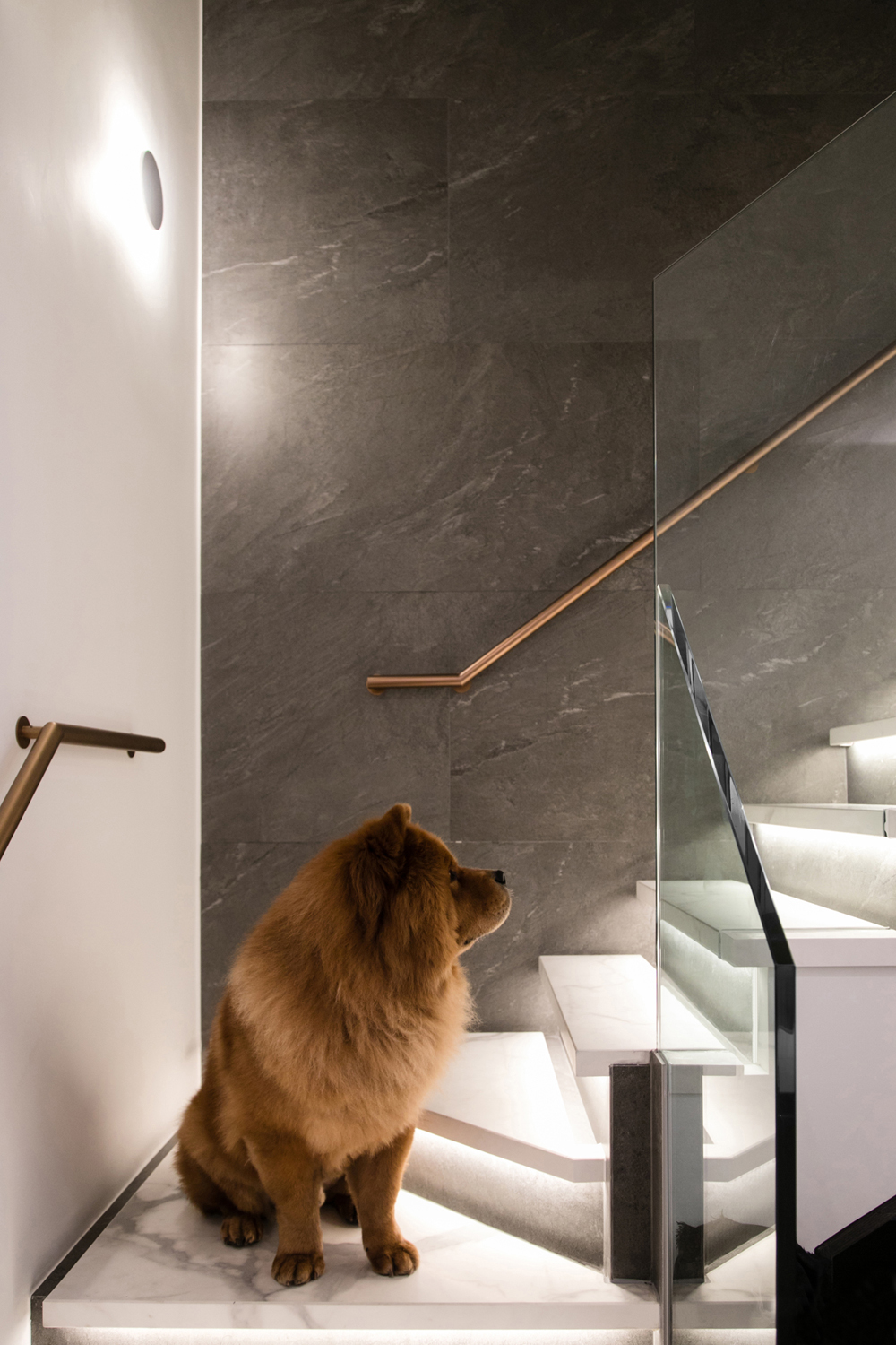 Split-Level apartment in Hong Kong... with a cute dog
